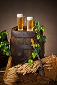 foto of hop-plant  - two glasses of beer with hops and barley - JPG
