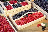 picture of crate  - Black And Red Currants Berries Harvest In The Wood Crate And Red Curant Bush In The Summer Garden Background - JPG
