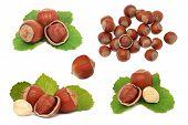 pic of hazelnut  - Set ripe hazelnuts isolated on white background - JPG