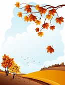 foto of maple tree  - Vector illustration  - JPG