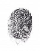 picture of fingerprint  - Single black fingerprint isolated on white  - JPG