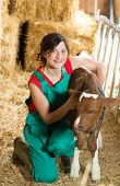 image of veterinary  - Veterinary on a farm performing a physical examination in a cow - JPG