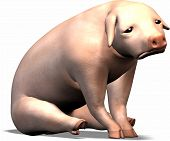 stock photo of augen  - this pig is sad - JPG