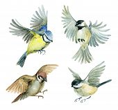 Постер, плакат: Flying Birds Set