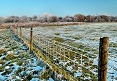Wintery Fence Line