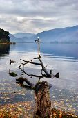 Gull Perched On Branch In A Lake