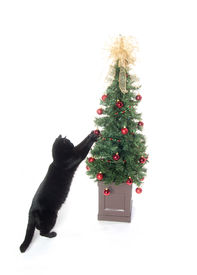 picture of black cat  - Black cat playing with Christmas tree and decorations on white background - JPG