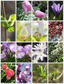 Spring Montage