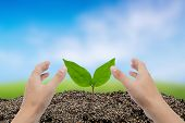 Hand Of Man Growing And Nurturing Tree Growing On Fertile Soil With Nature Background, Care Environm poster