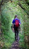 Man Walking In A Summer Forest Alone. Man Walking Away In Woods. Hiking In Woods. Hiker Walk Through poster