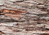 Bark Of Tropical Tree