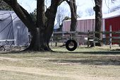 image of tire swing  - An empty tire swing on a sunny day - JPG