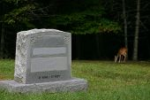 A Deer At The Grave