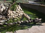 image of oddities  - All the turtles in enclosure are lined up in a row on a tree limb - JPG