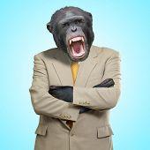 Gorila irritada no terno em fundo azul