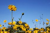 Beautiful Flowers On A Background Of Blue Sky