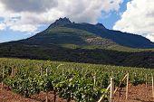 Vineyard And Mountains, Crimea , Ukraine