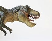 foto of tyrannosaurus  - A Tyrannosaurus Rex Hunts Against a White Background - JPG