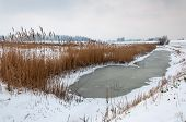 Frozen Ditch With Reeds In A Snowy Dutch Landscape
