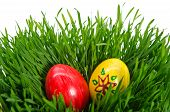 Red Easter Eggs In Green Grass With White Background