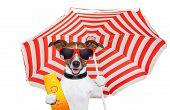 cão de Verão