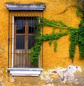 Yellow Wall And Vine