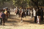Test Riding Horses In India