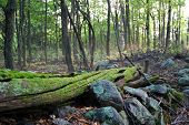 image of log fence  - A moss covered log - JPG