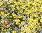 Yellow, Blue and Red Flowers Profusion