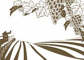 stock photo of vines  - Vineyard grapevine farm illustration with rolling planted hills and farmhouse - JPG