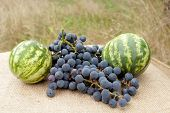 still life from two watermelons and grape