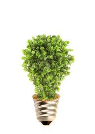stock photo of environmentally friendly  - Tree in lightbulb socket symbolizing ecology and eco environmental friendly energy - JPG
