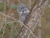 foto of dog-walker  - The owl - JPG