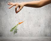 stock photo of dangling a carrot  - Close up of hand holding stick with carrot dangling on rope - JPG