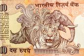 stock photo of indian currency  - importance of wildlife animals rhinoceros - JPG