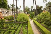 Palms Walls Garden Alcazar Royal Palace Seville Spain
