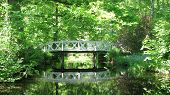 Bridge In Greenery