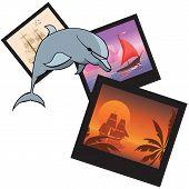 Dolphin And  Photoframes