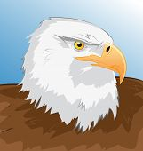 Sea Eagle Vector Illustration