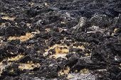 Black Basaltic Seaside In Jeju Island