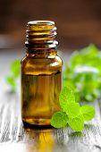 Mint oil