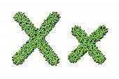 Duckweed Alphabet Letters