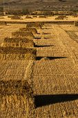 Wheat field, landscape in tiebt china.