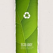 Green leaf texture under torn paper with recycling symbol. Vector, EPS10