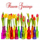 Many Tulip And Narcissus Flowers In Colorful Vases