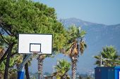 Hoop And Palms