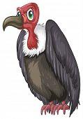 Illustration of a closeup vulture