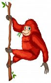 Illustration of a playful red orangutan on a white background