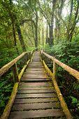 Jungle Landscape. Wooden Bridge At Misty Tropical Rain Forest. Travel Background At Doi Inthanon Par