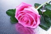 Beautiful pink rose on table close-up